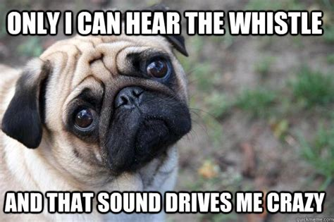 sounds only dogs can hear only i can hear the whistle and that sound drives me world problems