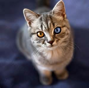 cats with different colored 15 amazing eyed cats amazing creatures