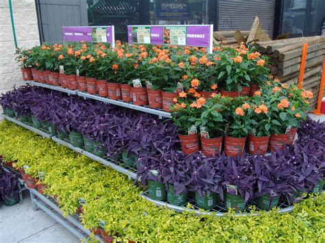 home depot perennials    insured  ross