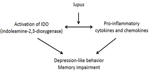 sle focus discussion report article on review lupus