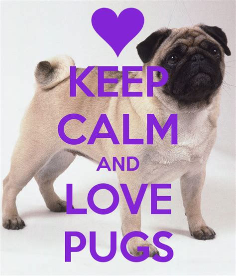 we pugs keep calm and pugs search projects to try a pug keep