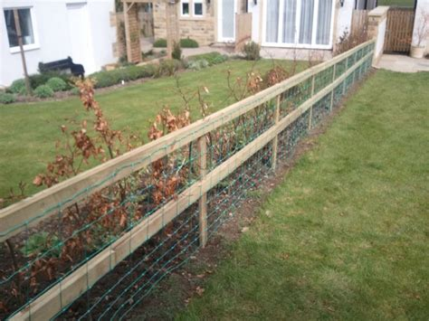 how to keep dog in yard without fence dog proof fence diy pinterest fence dog proof fence