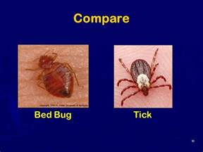 Can Bed Bugs Transmit Diseases Bed Bugs Amp Other Annoying Issues In The Workplace Ppt