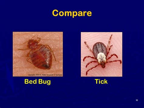 difference between ticks and bed bugs bed bug or tick 28 images ticks archives page 2 of 9