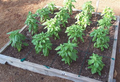 Gardening How Cubicfootgardening
