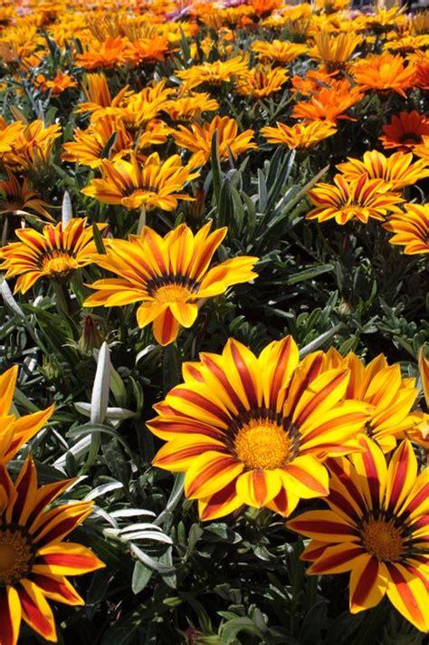 fiera dei fiori genova euroflora fiera di genova