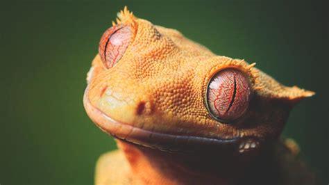 imagenes ojos de reptiles 191 d 243 nde viven los reptiles