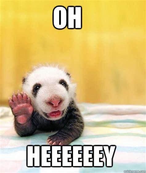 Cute Panda Memes - cute baby panda memes funny cute memes as well as meme it