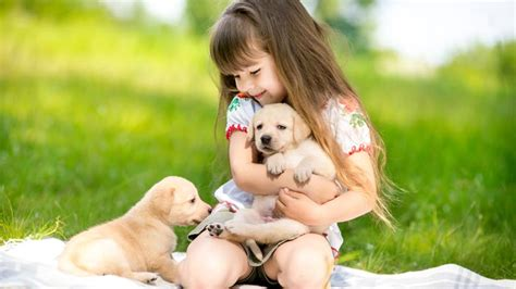 puppy has fever akc pet insurance health insurance for dogs and cats