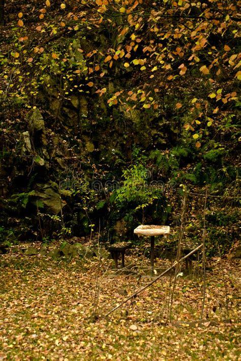 giardino autunno giardino di autunno immagine stock immagine di verde