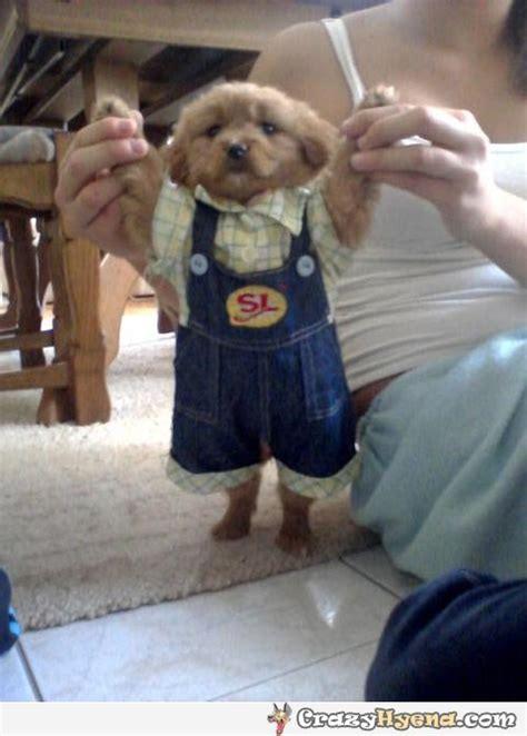 puppies in baby clothes wearing baby clothes