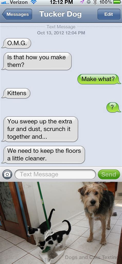 from pets text from dust bunnies with dogs and cats