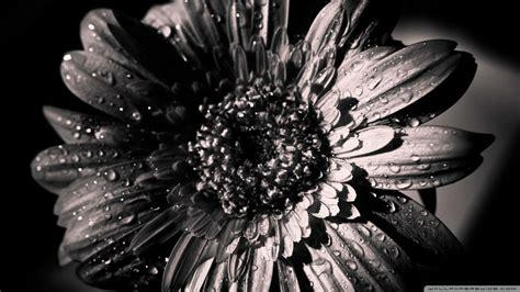 black and white wallpaper hd 1080p 1080p black and white wallpaper wallpapersafari