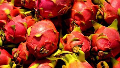 Teh Buah Naga khasiat di balik teh dari kulit buah naga sangat baik