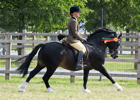 welsh section c m m ridden welsh section c who s qualified