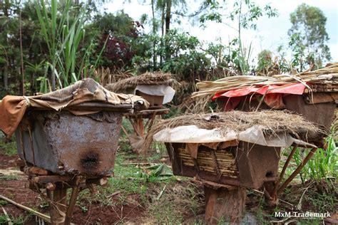 best bee hive top bar hives bee free apiaries