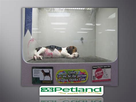 petland puppy mills pet store dogs puppy mills www imgkid the image kid has it