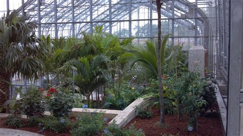 Botanical Garden Omaha Omaha Botanical Garden Tropical Plants For Sale Tropical Plants Florida