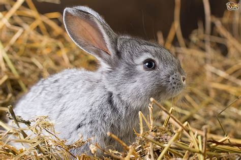 How to feed your rabbit a natural diet   Pets4Homes