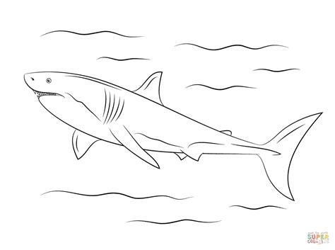 great white shark coloring page free printable coloring