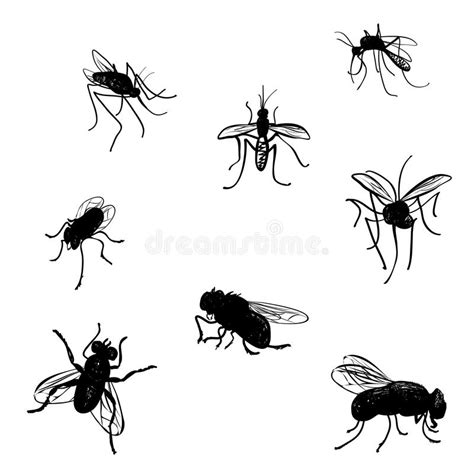 doodle fly doodle flies and mosquitoes stock vector illustration