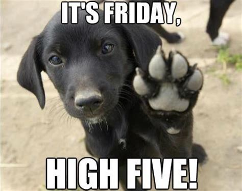 Friday Dog Meme - its friday hi five pictures photos and images for