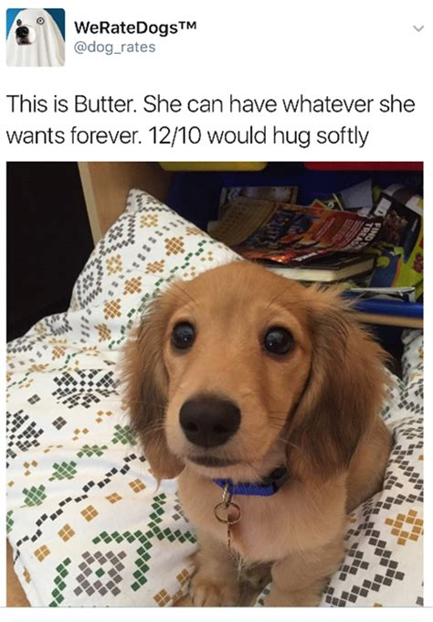 dogs rate quot we rate dogs quot are hilarious 16 pics