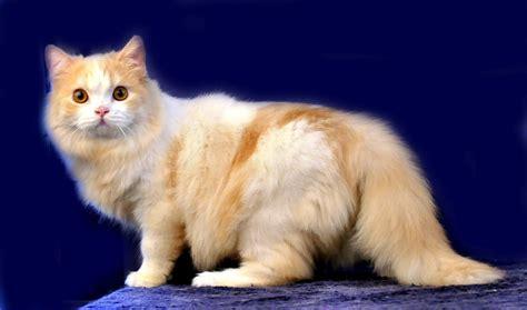 Dan Makanan Anak Kucing harga kucing ras di indonesia dan cara membedakan kwalitas kucing maju jaya