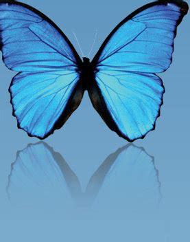 imagenes mariposas turquesas red rouge el gato azul mariposas turquesas regalos