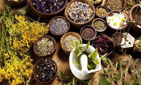 tanaman obat  terkenal  indonesia