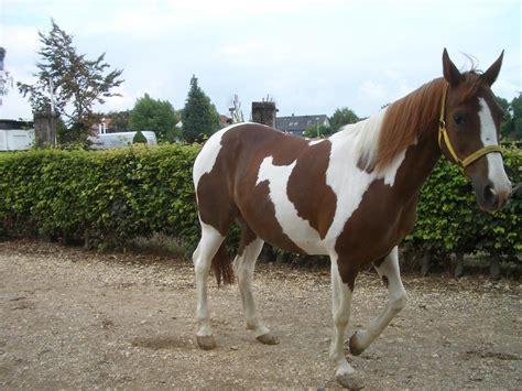 suche zu kaufen pferde kleinanzeigen liebevolle