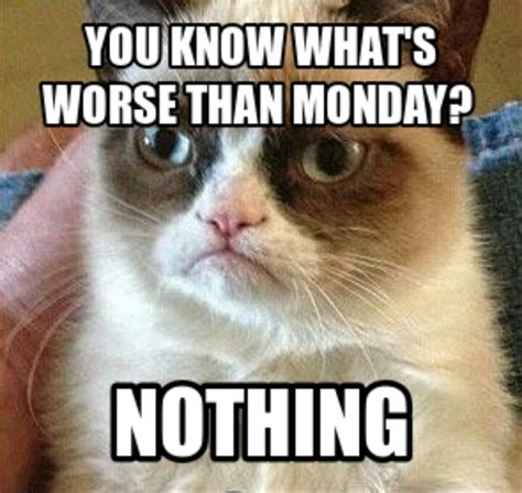 Grumpy Cat Monday Meme - 12 best images about surviving monday on pinterest