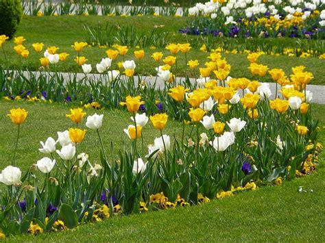 fiori per bordure perenni bordure
