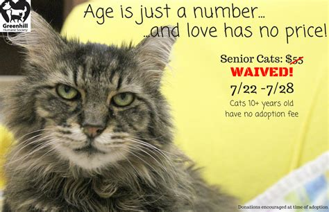 what age is a a senior age is just a number and has no price greenhill humane society