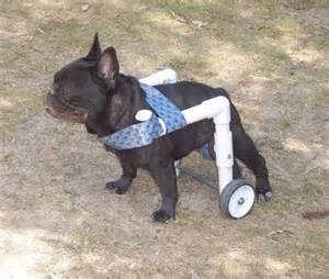 wheel chairs for dogs diy wheelchair search weiners