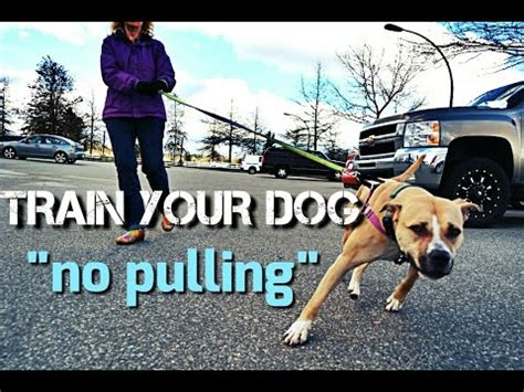 how to a not to pull when walking your to not pull on walks leash walking