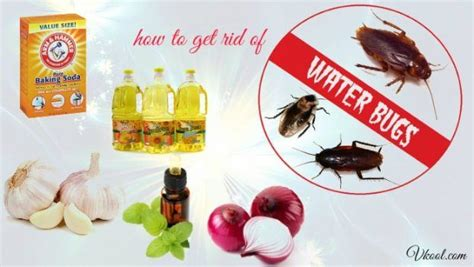 water bugs in house how to get rid 14 solutions how to get rid of water bugs naturally fast
