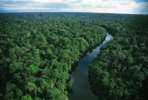 amazon america amazon rainforest in south america travel and tourism