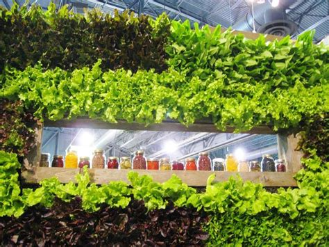 edible indoor wall garden how to grow lettuce leafy green veggies this fall indoors out edible walls