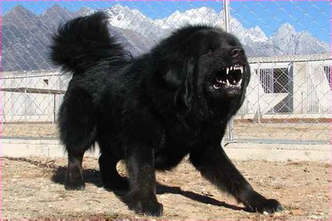 least aggressive breeds top least aggressive breeds simple image gallery
