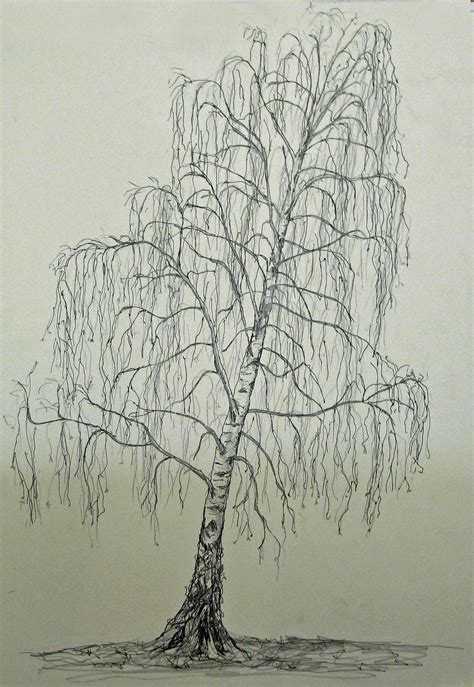 Drawing Trees by Birch Trees Drawing Www Pixshark Images Galleries