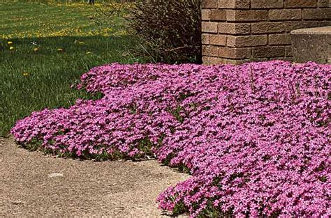 best all year plants top 10 year perennials year plants birds blooms