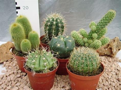 da appartamento le piante grasse da appartamento piante appartamento