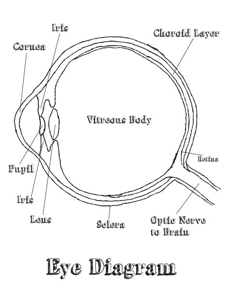 eyeball diagram labeled free coloring pages of eye diagram