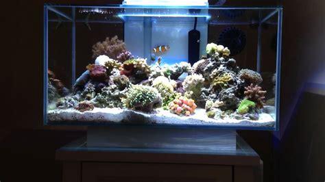 fluval edge marine light fluval edge nano reef youtube