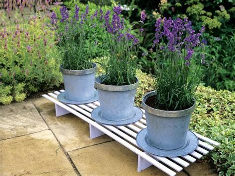 lavender container garden lavender trees hgtv