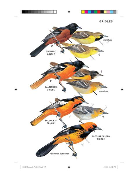 peterson field guide to birds of north america peterson field guides ebook peterson field guide to birds of north america peterson