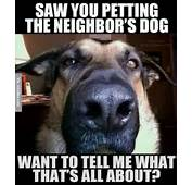 Saw You Petting The Neighbors Dog  Meme Jokes Memes &amp Pictures