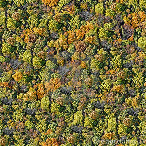 texture pattern forest forest seamless pattern stock photo image 11275700