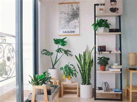 plants  pots  glass window  shelf photo